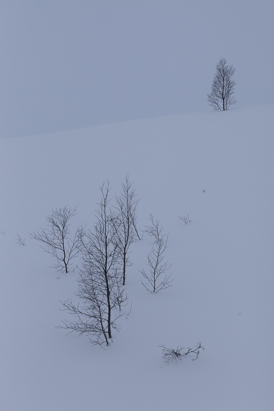 Trees on snowy hill