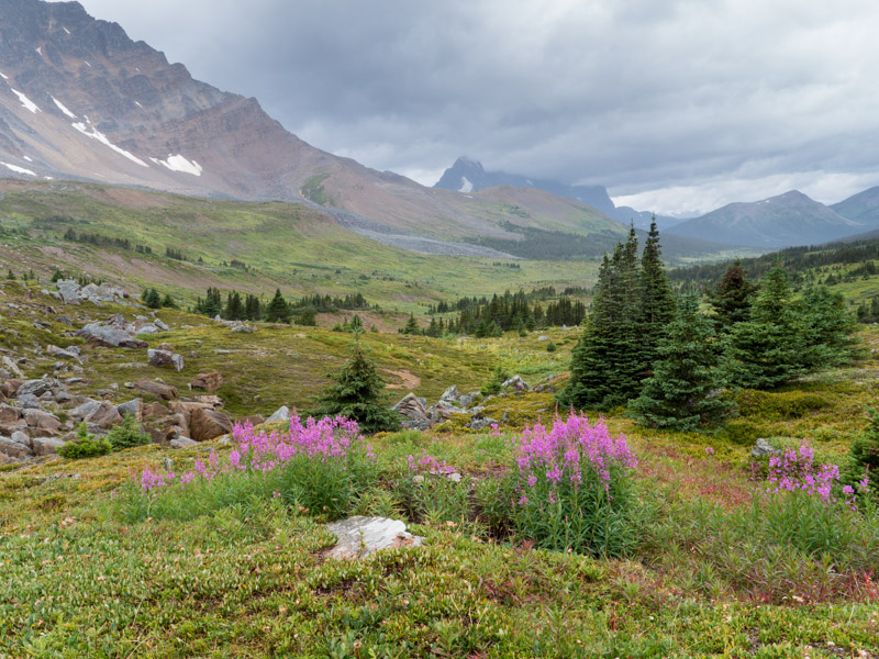 20130817_Tonquin Valley_0913.jpg