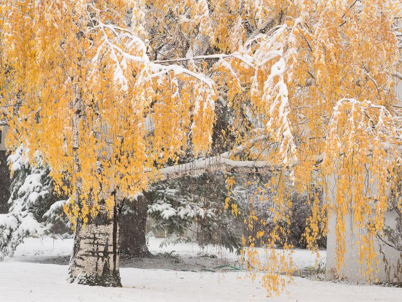 20131027_Calgary_0069.jpg