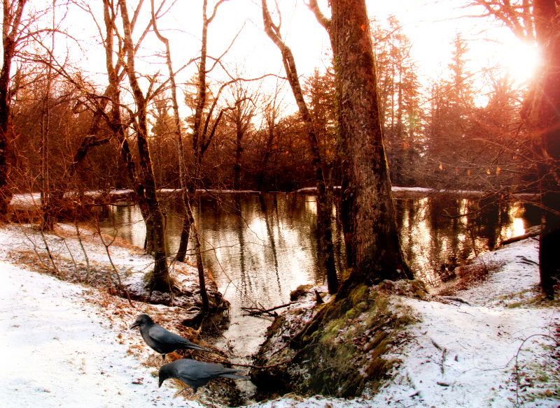 Winter pond...