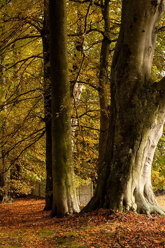22nd October 2013 <br> October leaves