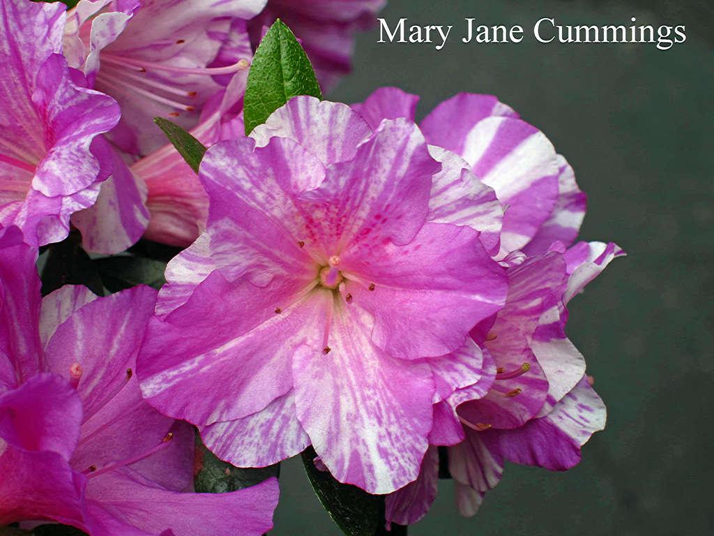 Mary Jane Cummings