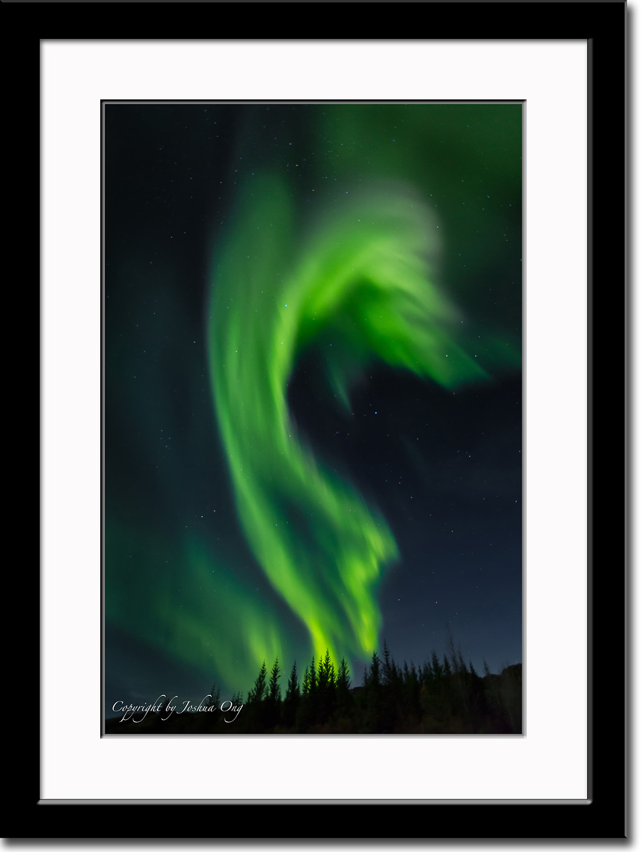 Aurora Borealis 4 - Appearing Like Forest Fire