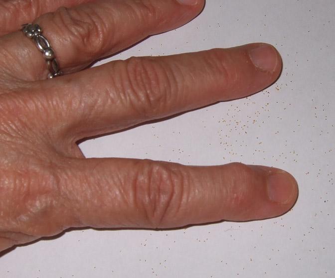 DSCF8902 Teeny Tiny Begonia Seed