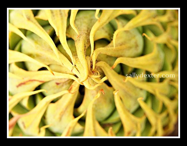 native flora detail