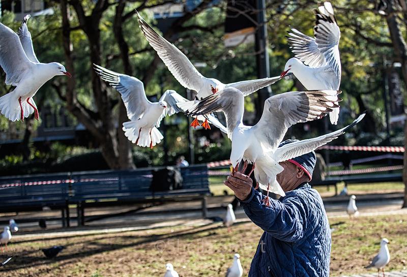 Man feeding  seagulls