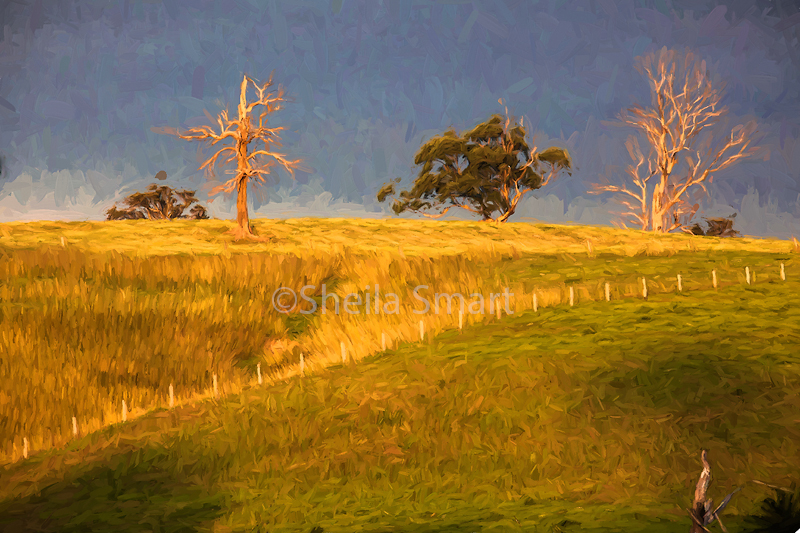 Paddock with dead trees
