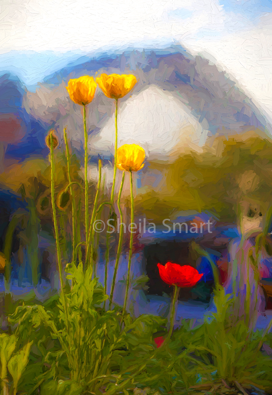 Poppies and Bridge
