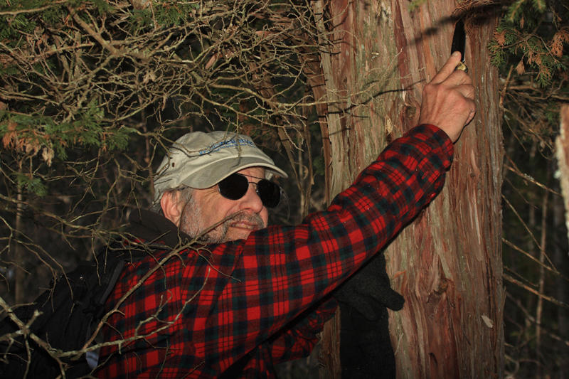 Larry collecting rare fungi
