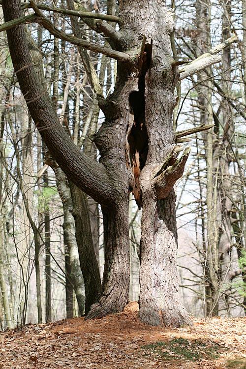 See-thru tree
