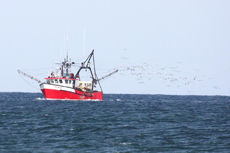 Fishing boat followed by lots of gulls