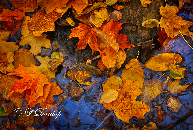 61.2 - Fall Leaf Pool