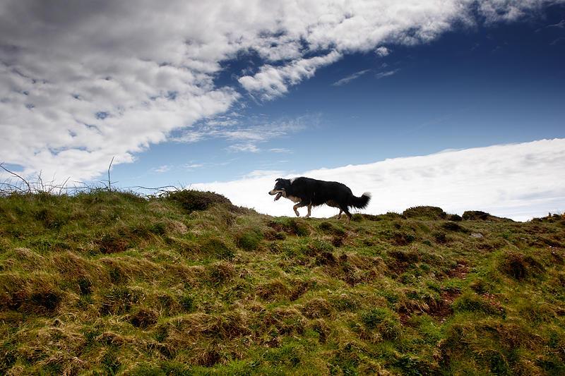 Dog by Gary Martin
