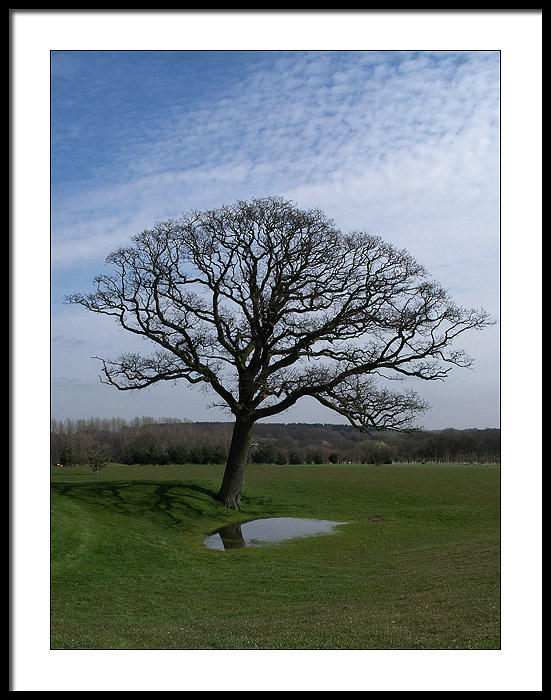 Tree beside the 11th Green on The Hill Course at Barnham Broom Golf Club, Norfolk