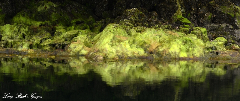 Green Moss, Jane Bay, Vancouver Island BC, Canada