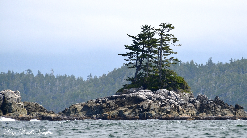 Island in the Broken Group, Barkley Sound, Vancouver Island, Canada