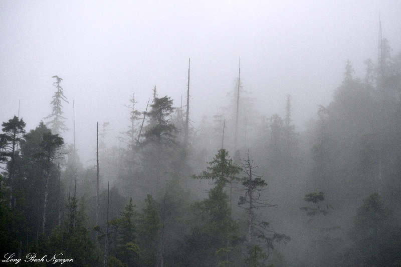 mysterious landscape, Vancouver Island, Canada