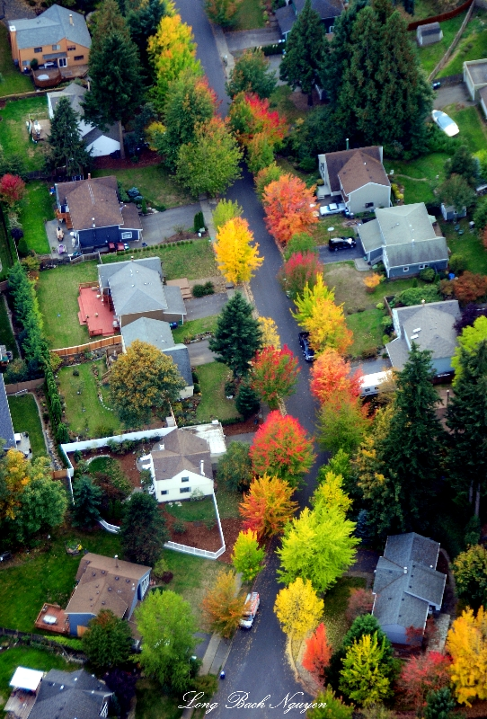 fall colors on quite street, Seattle