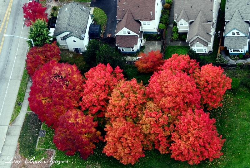 explosion of colors, Seattle, Washington