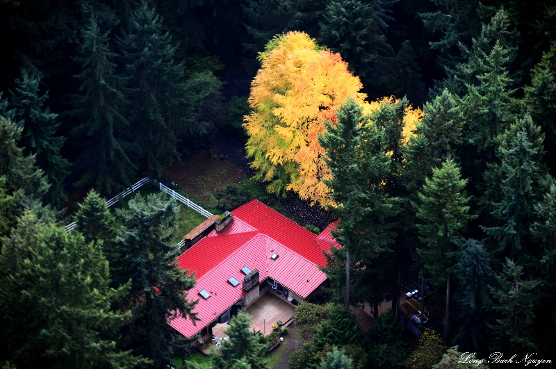 Red Roof and Yellow tree