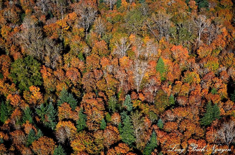 fall foliages over Sammanish, Washington