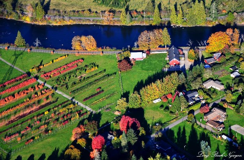 Tree farm, SE David Powell Rd, Snoqualmie River, Fall City