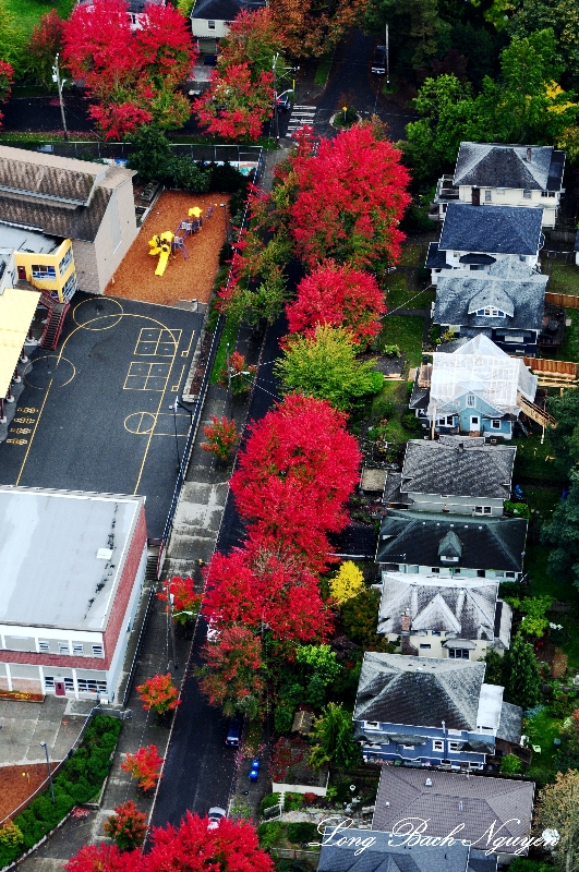 fall colors in Central District Seattle