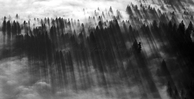 line of shadows