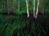 Kawana Forest