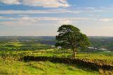 Lone Tree View