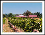Woodmill Winery.jpg