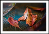 Fallen Petals