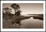 Gulf Coast 2