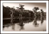 Wakulla Springs 2