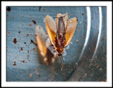 Reflected Flying Bug
