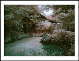 Woodland Garden Corner in False Color IR