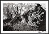Iced Trees Against Victorian Farmhouse
