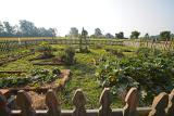 Early early morning garden