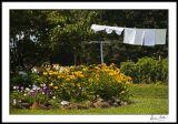Summertime Laundry