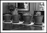 Herb Pots in Morning Light
