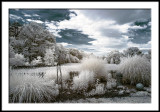 My World in Infrared