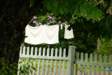 P1000347.jpg laundry and lilacs, on the way to newfoundland  , see my new poster calendars 2001 at amazon link below