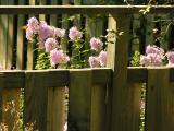 DSCN0480 lilac butterfly in dancing light.jpg