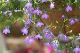 DSC05864libelia? quiet flower dance.. from portland market... my last pad was from market also