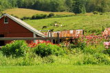DSC08141.jpg a snap of vermont horses and flowers for my daughter Carolyn!