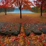 Fall Foliage - 2008