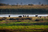 IMG_7336 - Hula Valley Nature Reserve