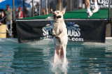 Splash Dog 01 17 09
