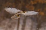 Flight on a snowy day