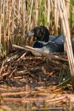 On nest